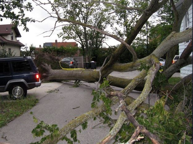 Why Trees Topple and Things You can do to Reduce Risks